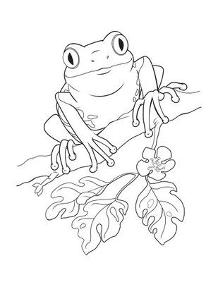 coqui coloring page coqui in the shade clean line by mavericktears on deviantart coqui page coloring