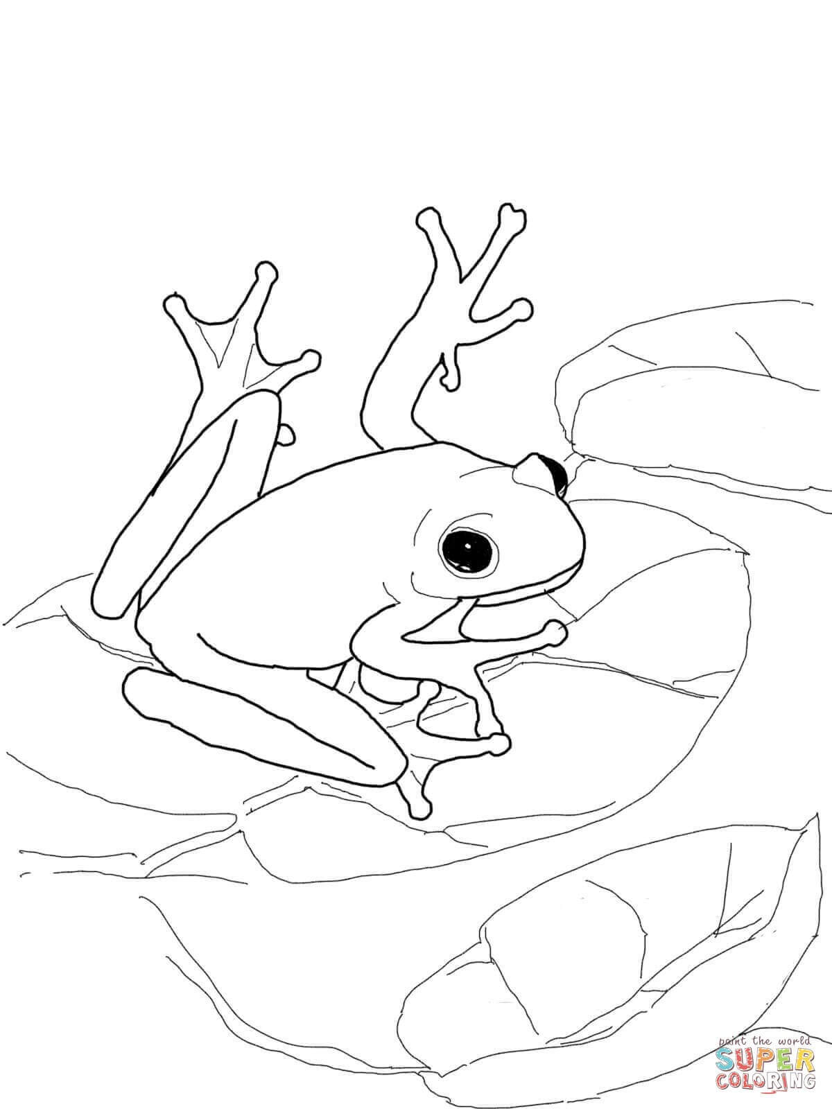 coqui coloring page the best free coqui coloring page images download from 27 coloring page coqui
