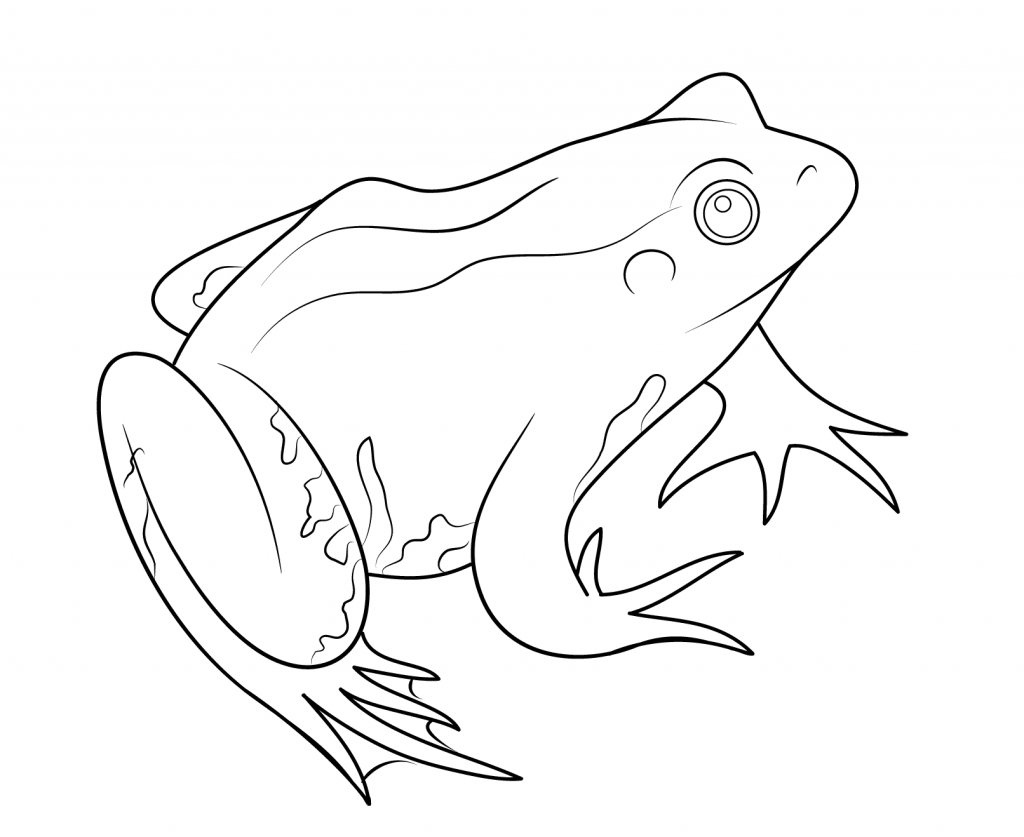 coqui coloring page the best free coqui drawing images download from 63 free coloring page coqui