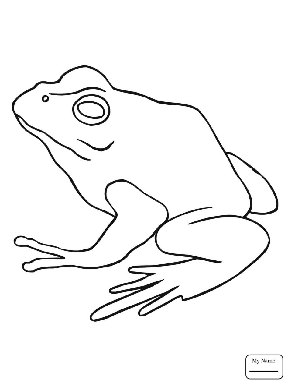 coqui coloring page the best free coqui drawing images download from 63 free coqui coloring page
