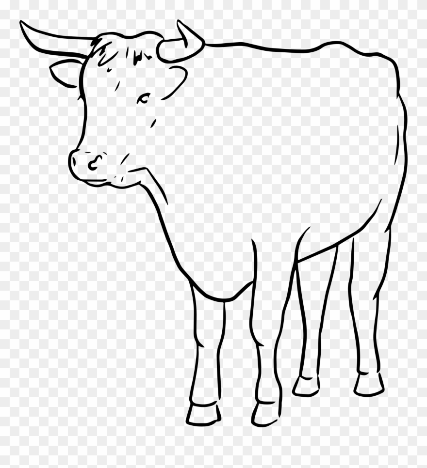 cow outline cow drawing outline at paintingvalleycom explore outline cow