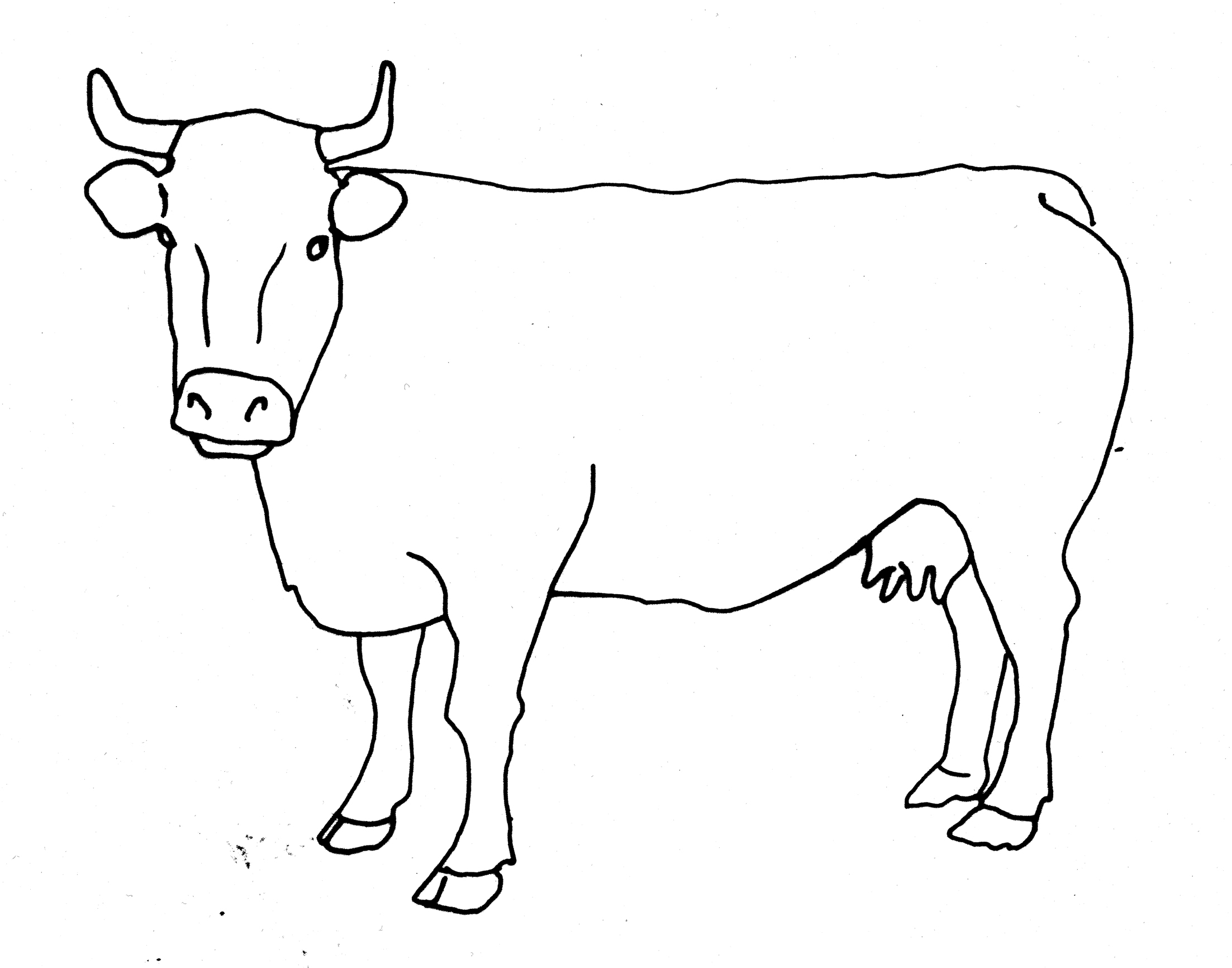 cow outline cow line drawing at paintingvalleycom explore cow outline
