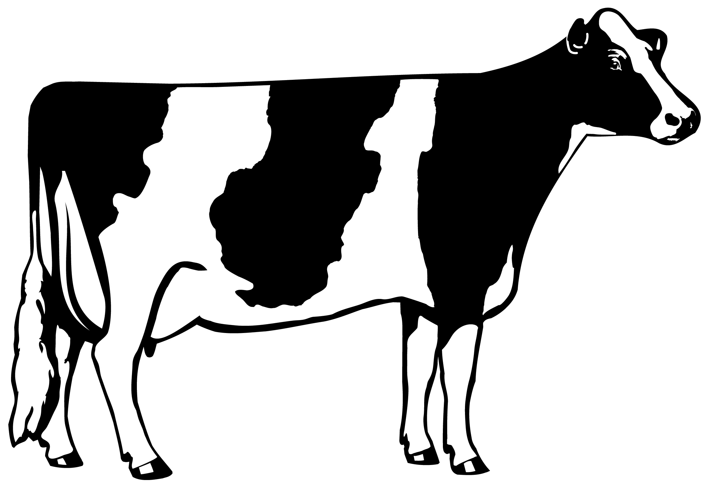 cow outline dairy cow clipart clipartsco cow outline