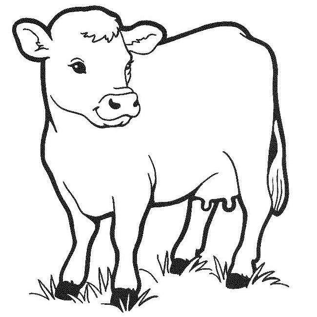 cow outline outline cow face drawing outline cow