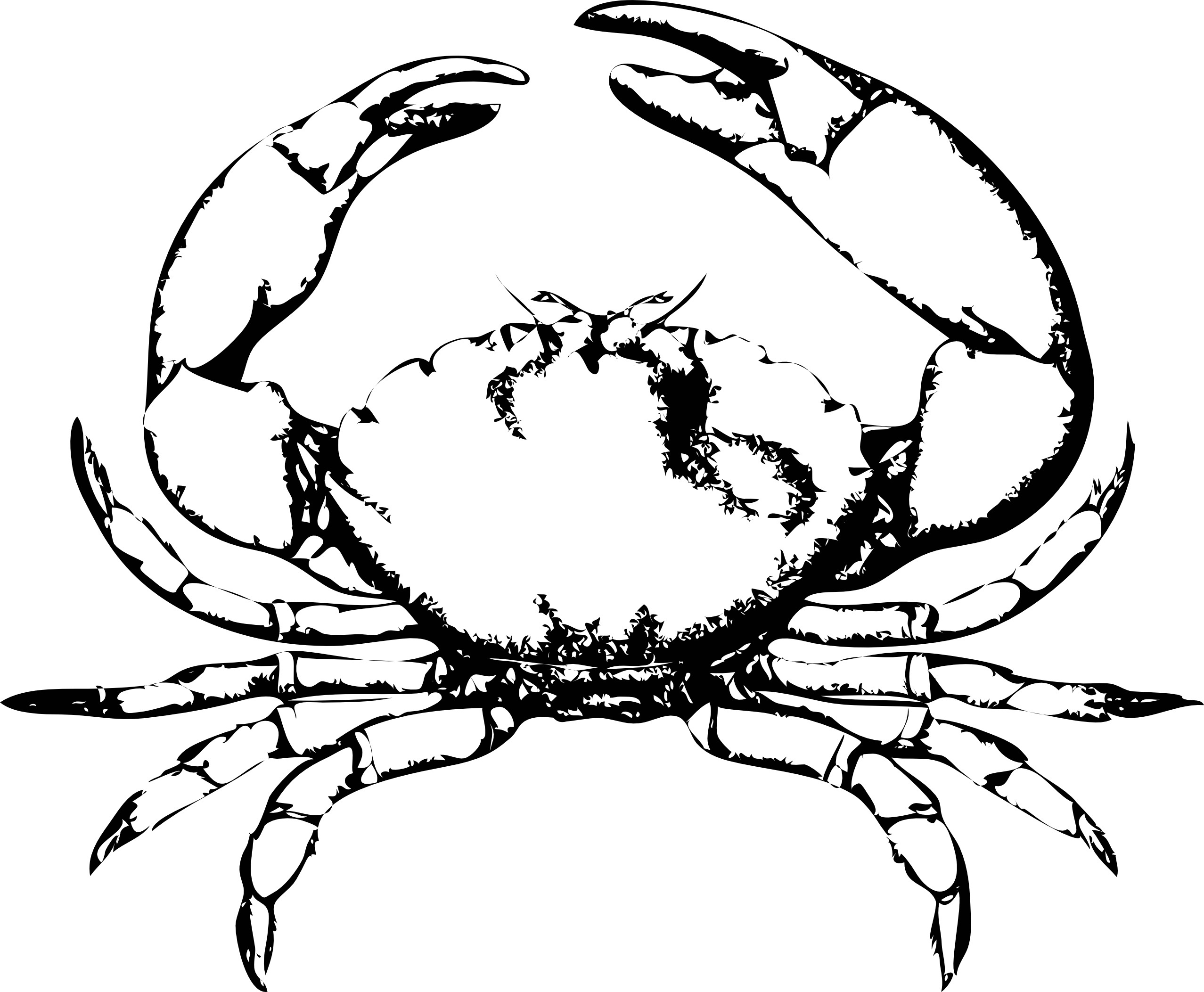 crab coloring sheet hermit crab coloring pages printable enjoy coloring crab coloring sheet