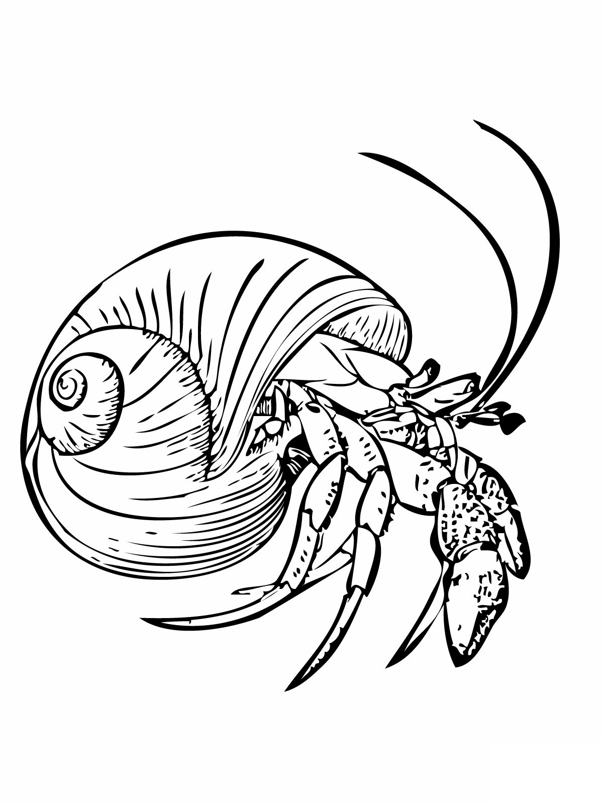 crab coloring sheet printable crab coloring pages for kids cool2bkids coloring crab sheet