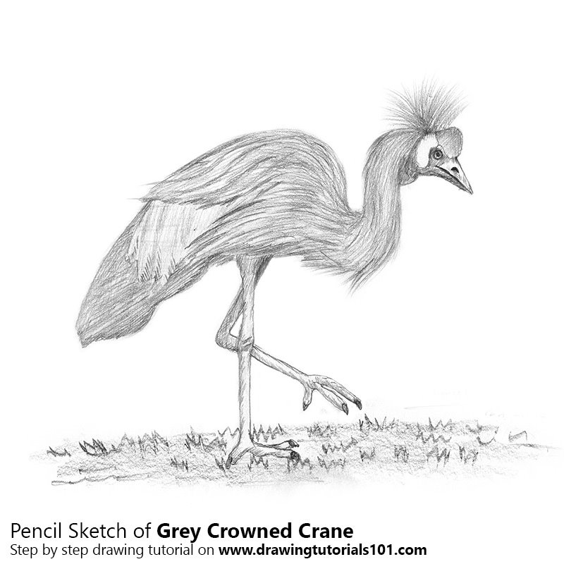crane drawing red crowned crane vector flying by hand drawing premium crane drawing