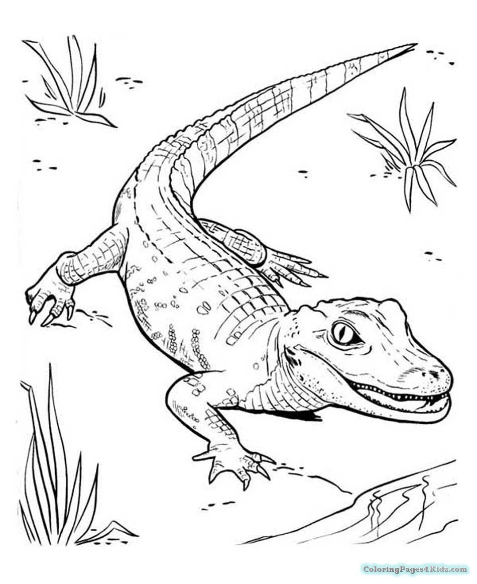 crocodile pictures to print crocodile drawing at getdrawings free download to print pictures crocodile