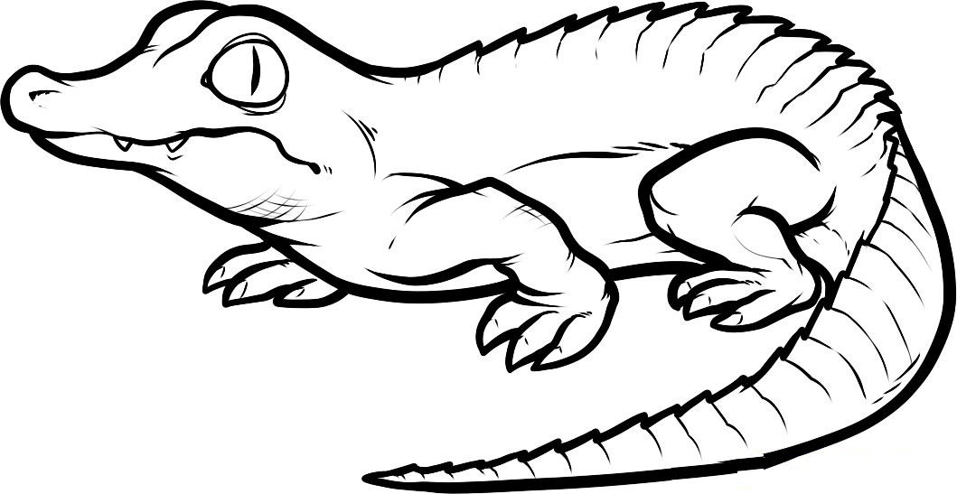 crocodile pictures to print free printable crocodile coloring pages for kids crocodile pictures to print