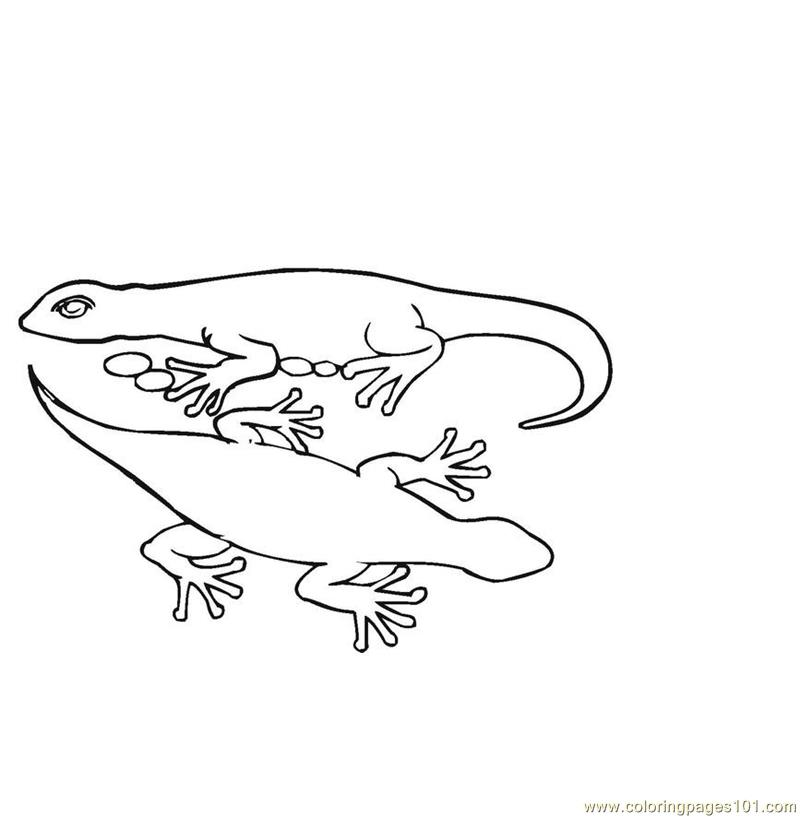 cute lizard coloring pages coloring pages lizard reptile gt lizard free printable coloring lizard cute pages