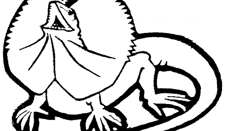 cute lizard coloring pages l for lizard coloring pages coloring pages color lizard lizard pages coloring cute