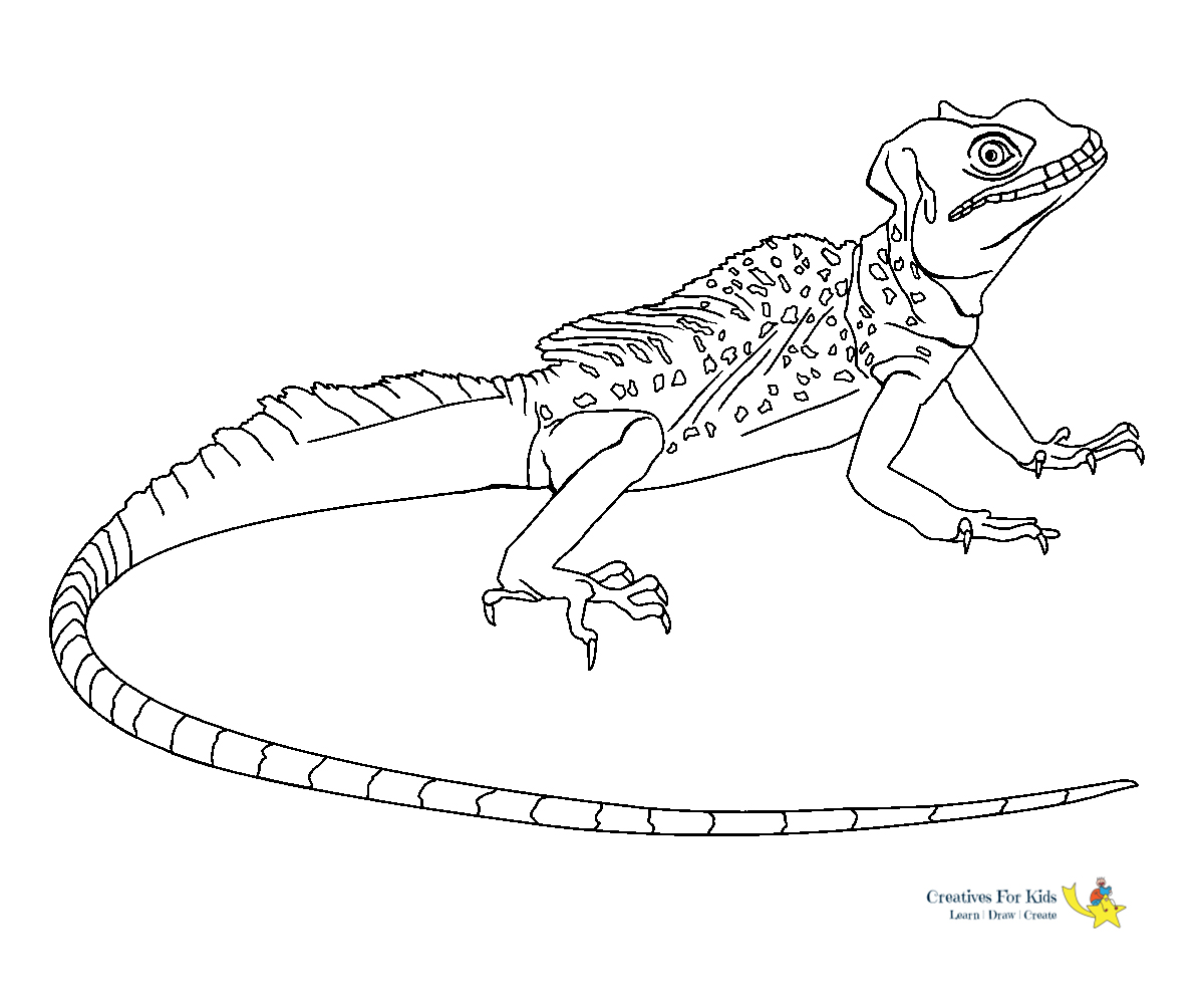 cute lizard coloring pages lizard coloring pages kiddo coloring cute pages lizard
