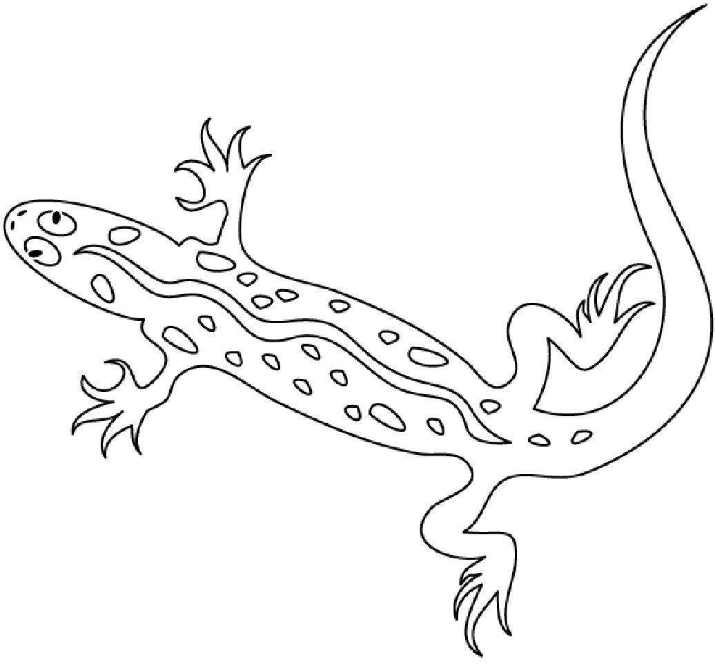 cute lizard coloring pages lizard coloring pages to download and print for free pages lizard cute coloring