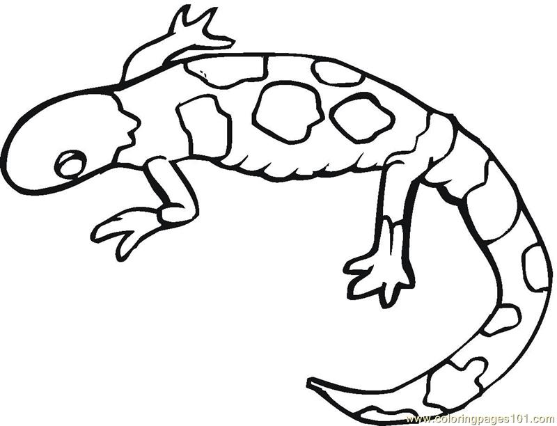 cute lizard coloring pages monitor lizard coloring pages download and print for free cute pages lizard coloring