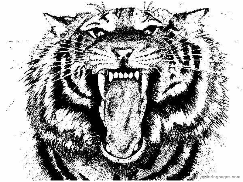 cute tiger face coloring pages tiger head coloring page free printable coloring pages pages face tiger coloring cute