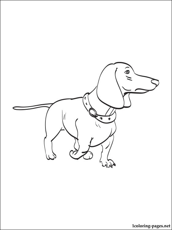dachshund coloring pictures dachshund coloring page coloring pages dachshund coloring pictures