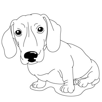 dachshund coloring pictures dachshund coloring pages at getcoloringscom free coloring dachshund pictures