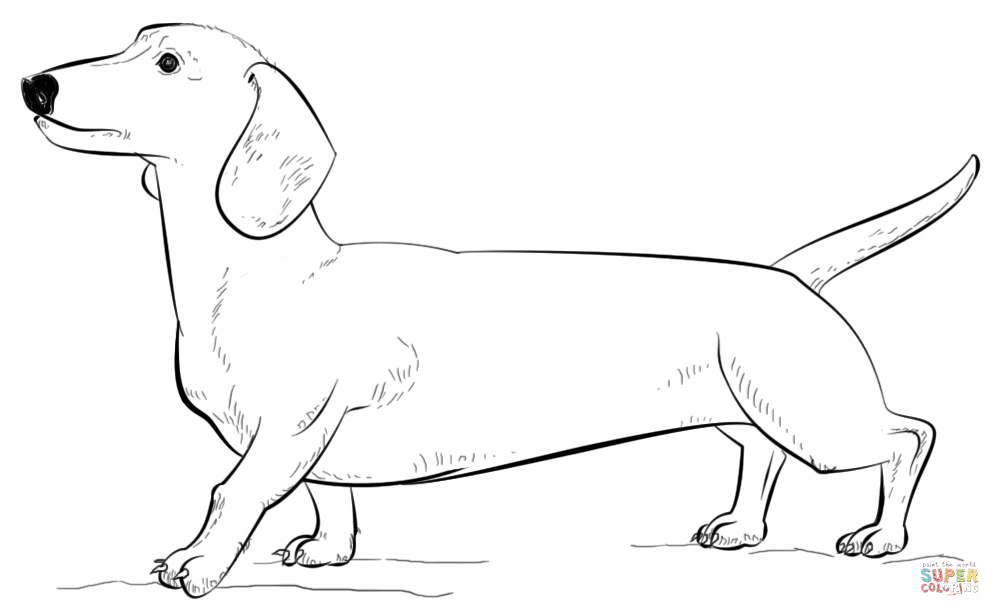 dachshund coloring pictures dachshund coloring pages coloring pages to download and dachshund pictures coloring