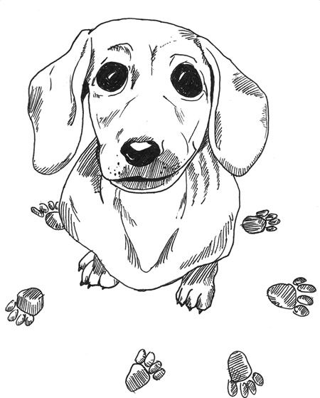 dachshund coloring pictures dachshund coloring pages coloring pages to download and pictures coloring dachshund