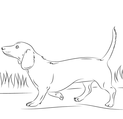 dachshund coloring pictures dachshund coloring pages coloring pages to download and pictures dachshund coloring