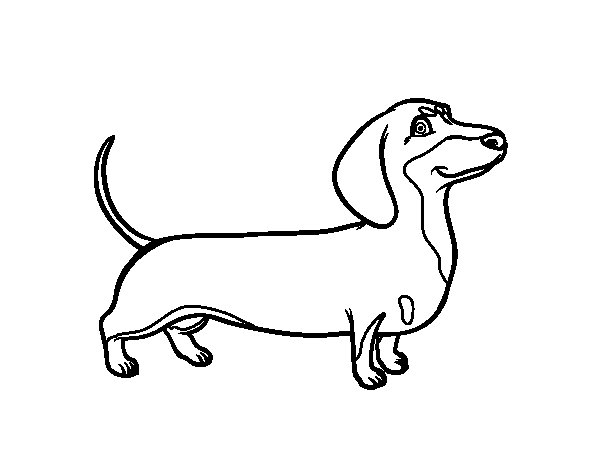 dachshund coloring pictures dachshund coloring pages dachshund pictures coloring