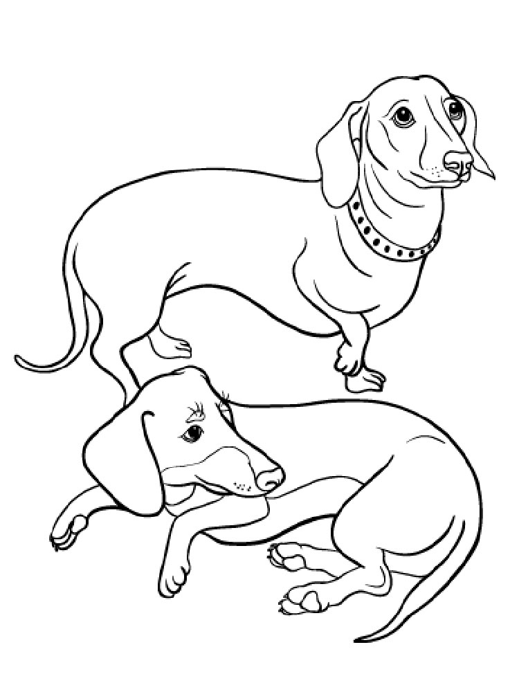 dachshund coloring pictures dachshund coloring pages k5 worksheets pictures dachshund coloring