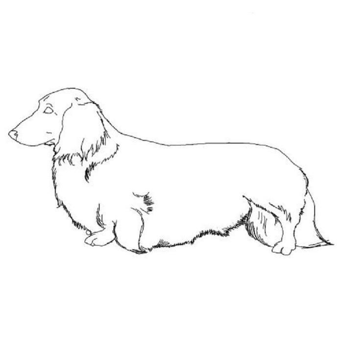 dachshund coloring pictures dachshund dog coloring pages dog coloring page coloring dachshund pictures