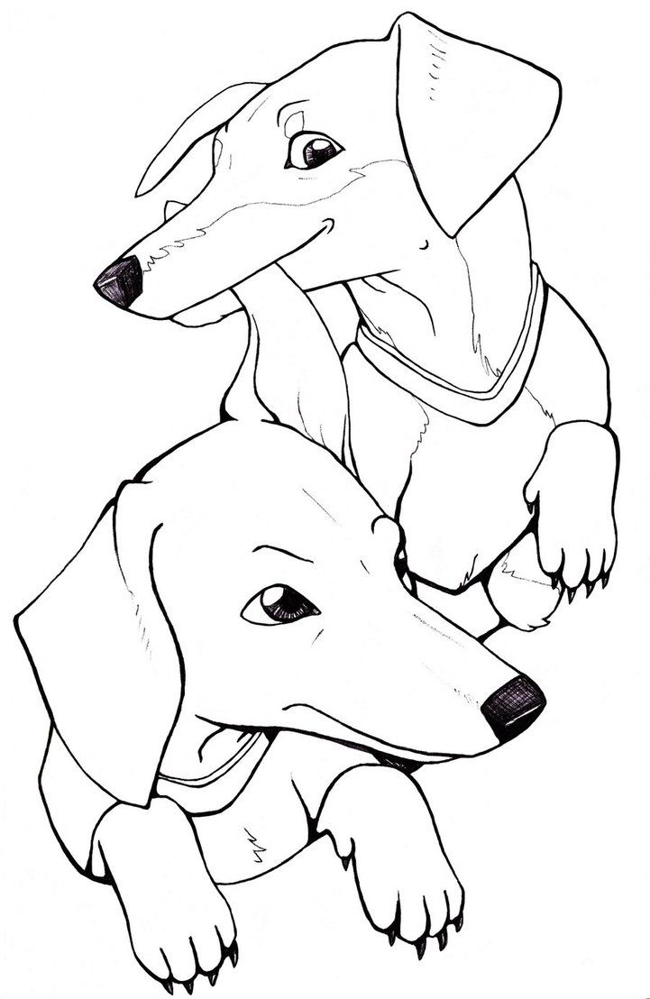 dachshund coloring pictures dachshund puppy coloring pages at getcoloringscom free dachshund pictures coloring