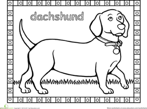 dachshund coloring pictures dachshund worksheet educationcom coloring dachshund pictures