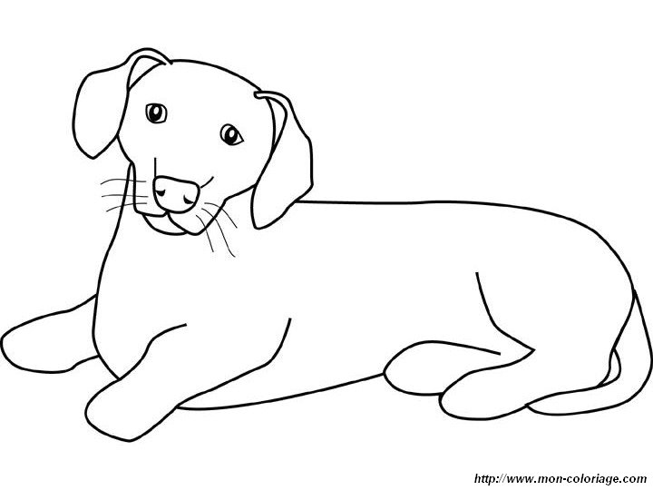 dachshund coloring pictures dog breed coloring pages coloring dachshund pictures