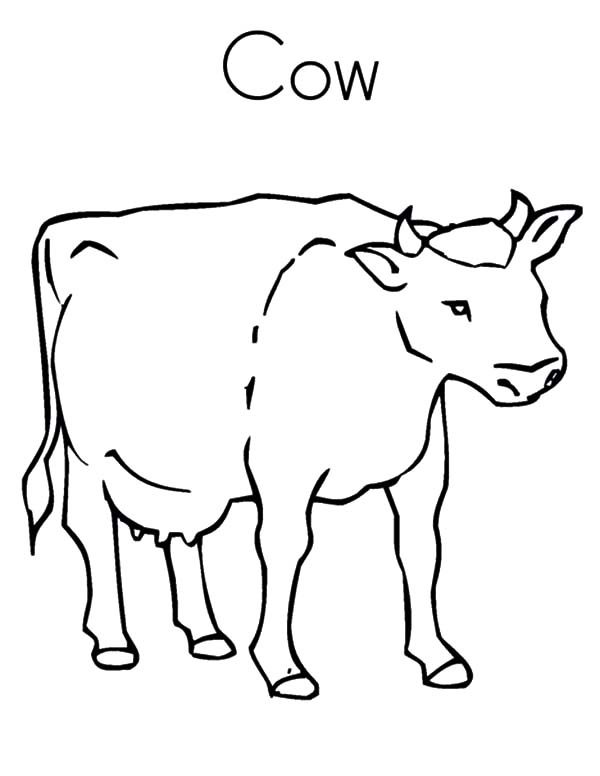dairy cow coloring pages coloring pages of a cow coloring home cow pages coloring dairy