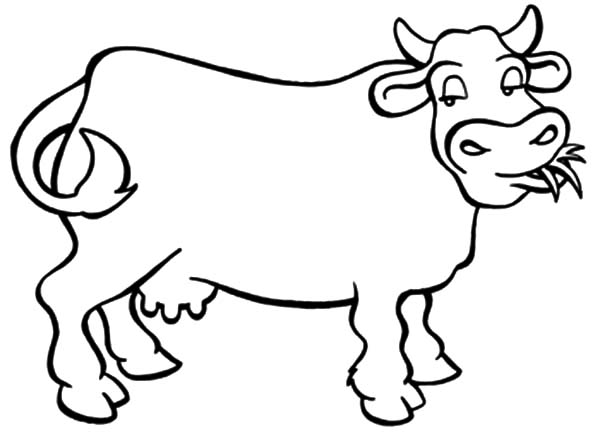 dairy cow coloring pages confused dairy cow coloring pages netart dairy coloring pages cow