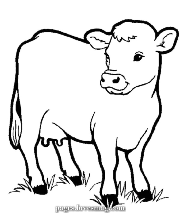 dairy cow coloring pages dairy cow chewing grass coloring pages netart cow coloring pages dairy