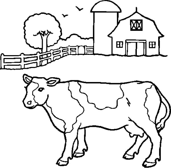 dairy cow coloring pages dairy cow coloring pages at getdrawings free download dairy cow pages coloring