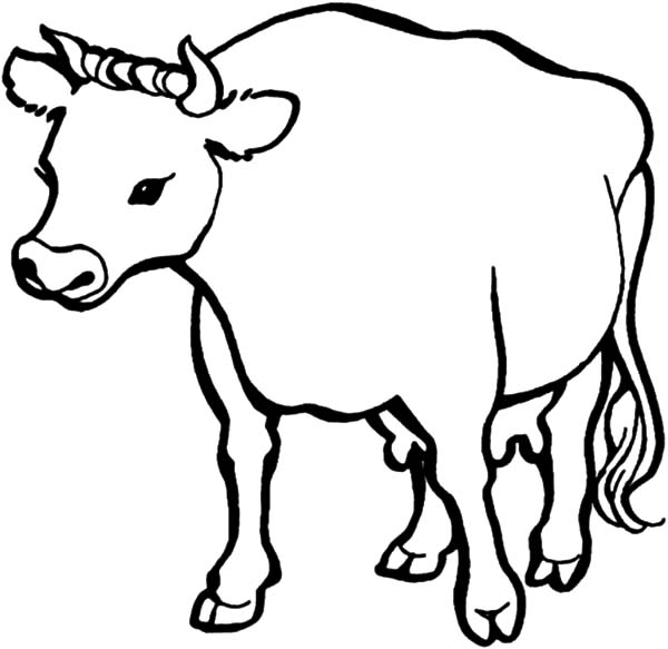 dairy cow coloring pages dairy cow netart cow dairy pages coloring