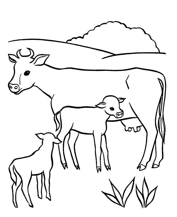 dairy cow coloring pages dairy cow netart dairy coloring pages cow