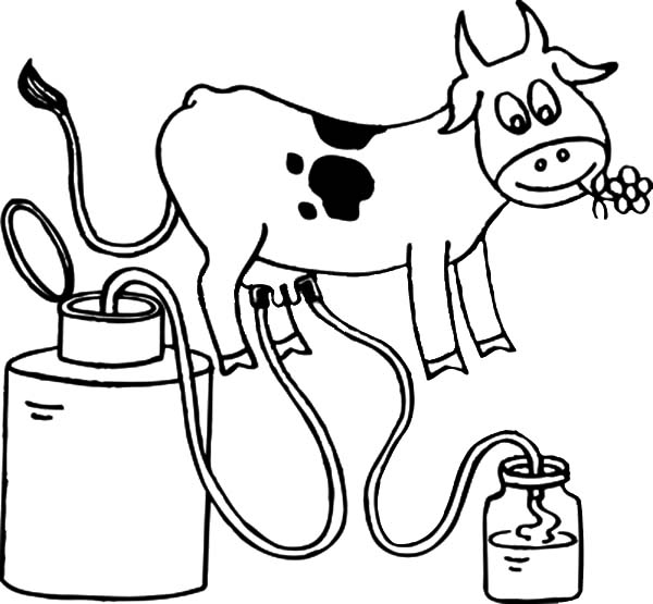 dairy cow coloring pages dairy cow pages realistic coloring pages pages coloring cow dairy