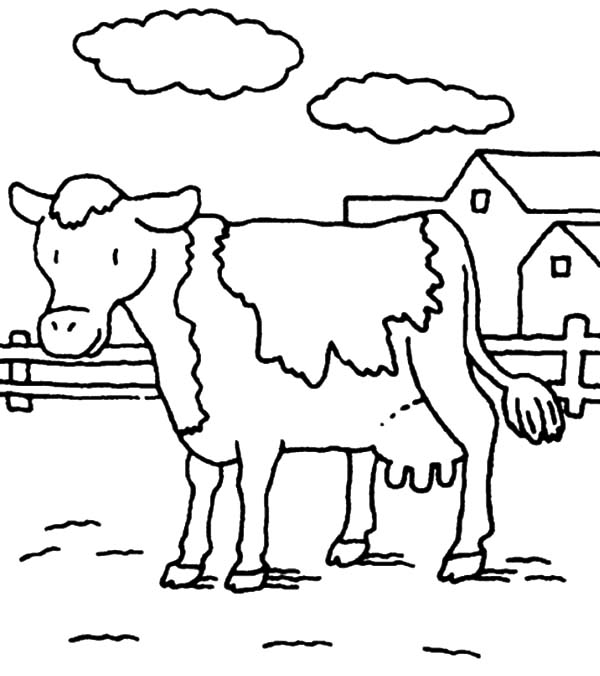 dairy cow coloring pages dairy cow produce fresh milk coloring pages netart cow coloring pages dairy