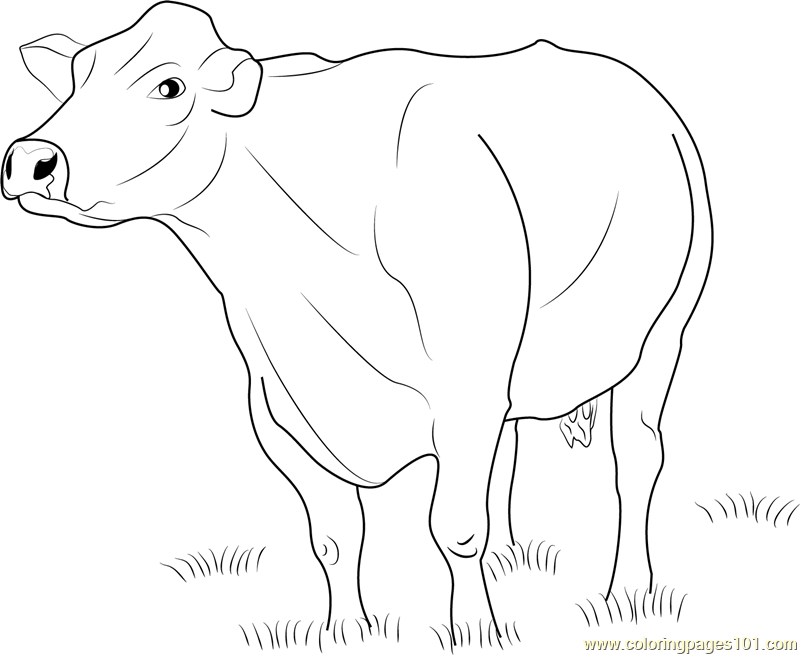 dairy cow coloring pages free printable cow coloring pages for kids cool2bkids dairy cow pages coloring