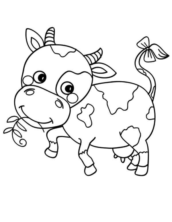dairy cow coloring pages how to draw dairy cow coloring pages netart cow coloring pages dairy