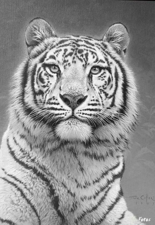 detailed cat coloring pages 590 best color pages cats images on pinterest coloring cat detailed pages coloring