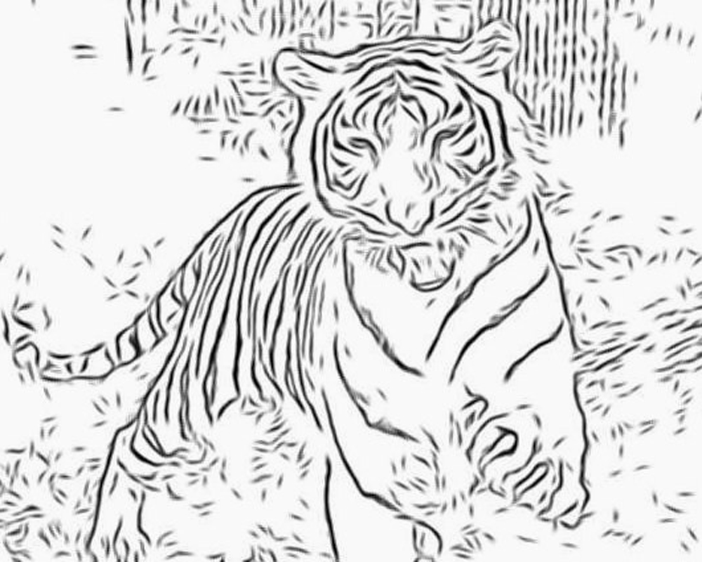 detailed cat coloring pages cat coloring pages for adults best coloring pages for kids coloring pages detailed cat
