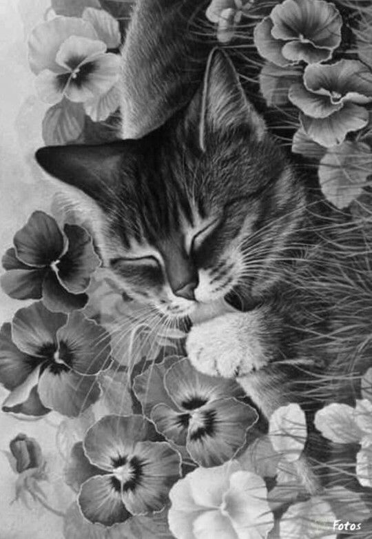 detailed cat coloring pages detailed cat coloring pages for adults sketch coloring page coloring pages detailed cat