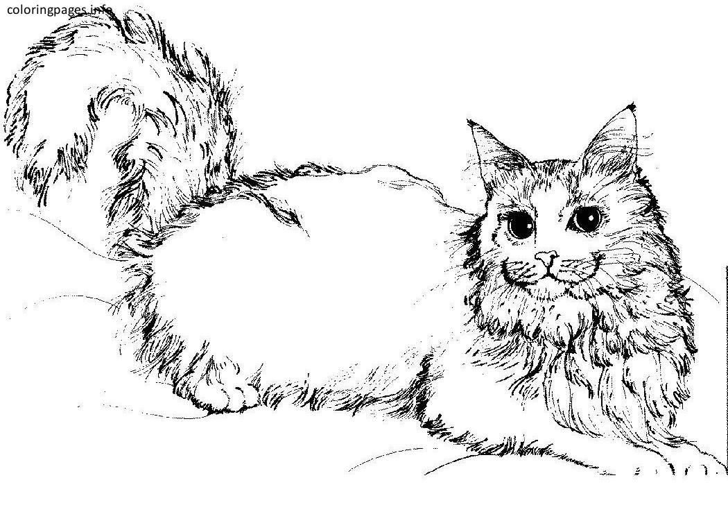 detailed cat coloring pages detailed cat coloring pages for adults sketch coloring page detailed pages coloring cat