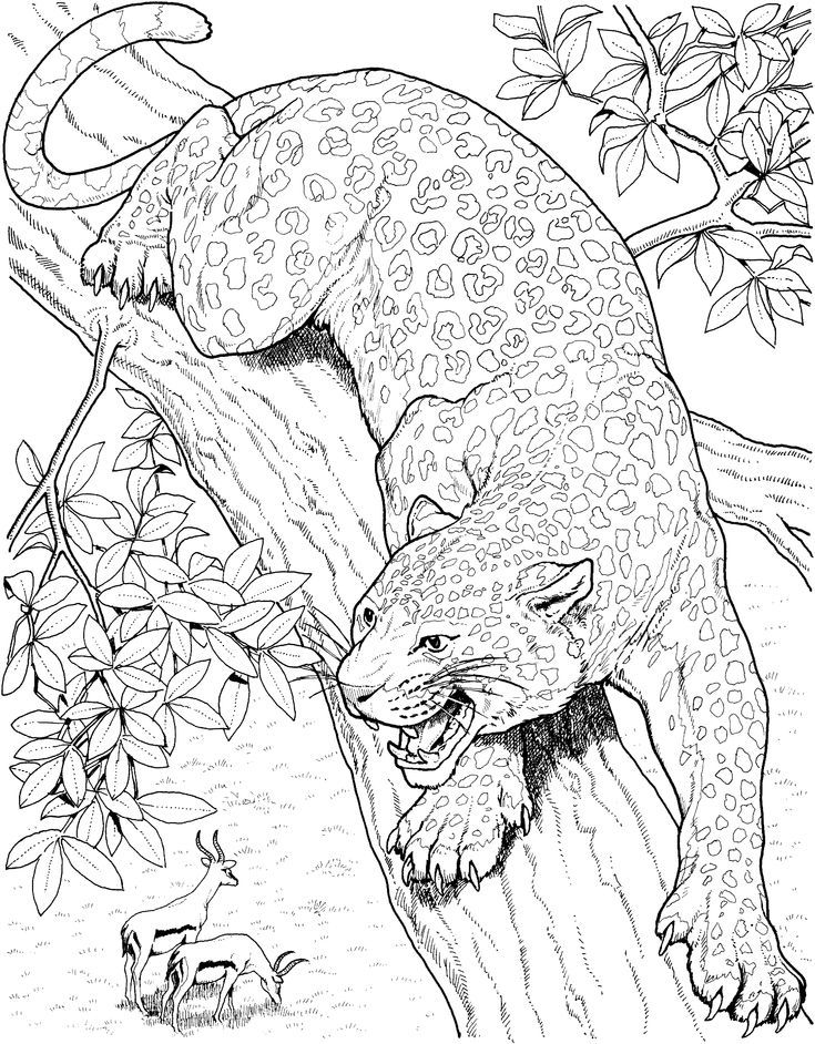 detailed cat coloring pages detailed cat drawing at getdrawings free download coloring pages detailed cat