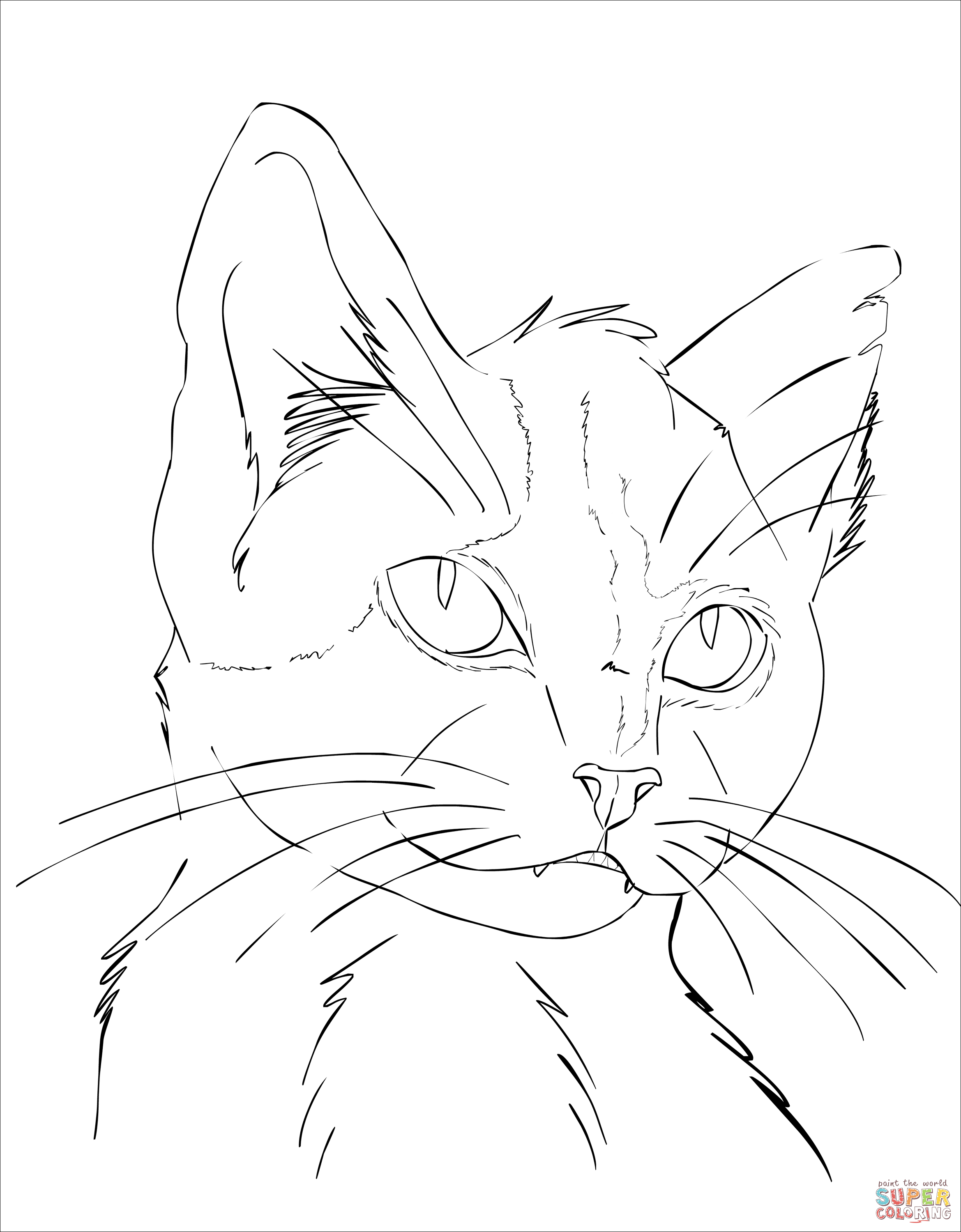 detailed cat coloring pages displaying 11111781963355560381227686800713450085742n cat pages detailed coloring