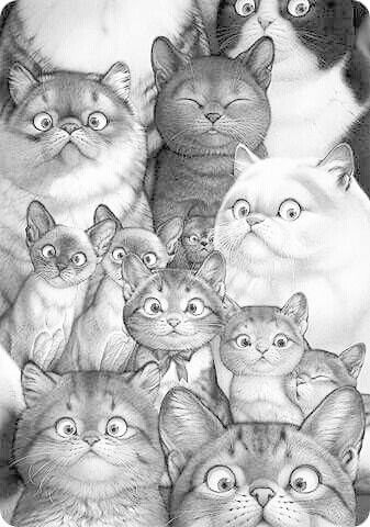 detailed cat coloring pages tiger cat coloring pages colouring adult detailed advanced pages detailed coloring cat