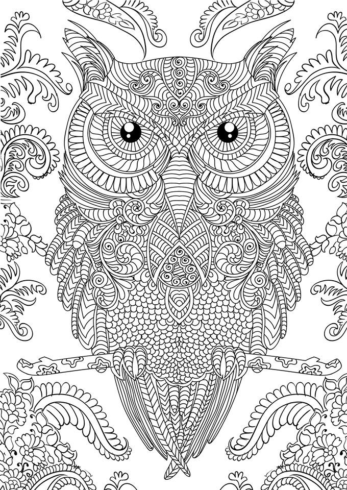 detailed coloring sheets owl coloring pages for adults free detailed owl coloring sheets coloring detailed