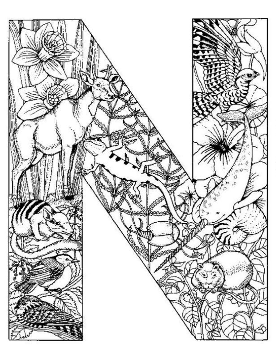 detailed coloring sheets very detailed coloring pages coloring home coloring detailed sheets