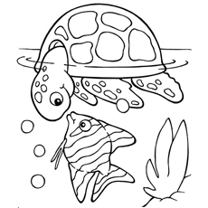 detailed fish coloring pages color pages of fish bestappsforkidscom pages coloring detailed fish